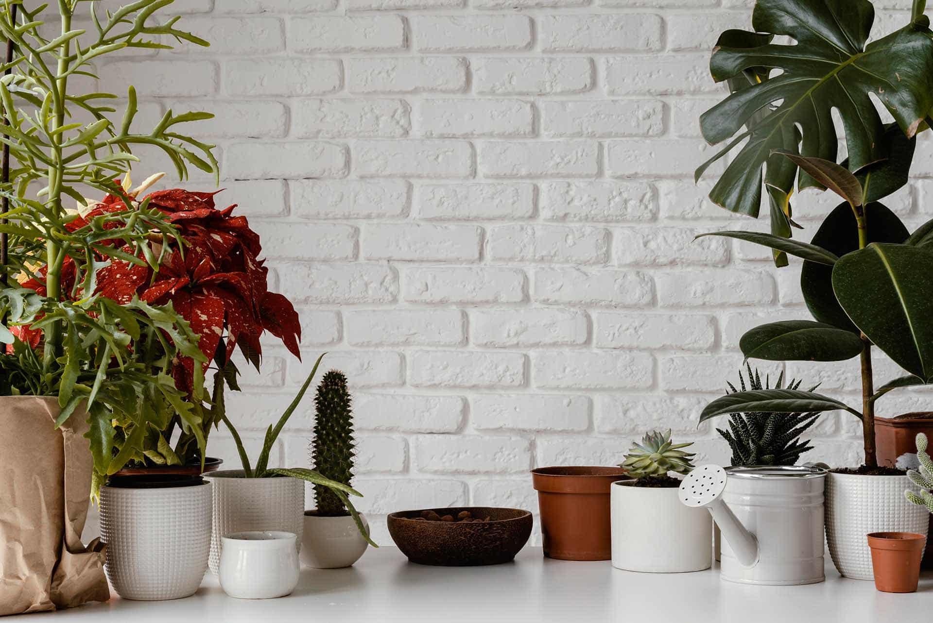 Evinizi Neden Bitkiler Ve Çiçeklerle Doldurmalısınız?